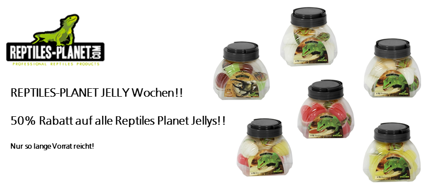 REPTILES PLANET JELLY WOCHEN