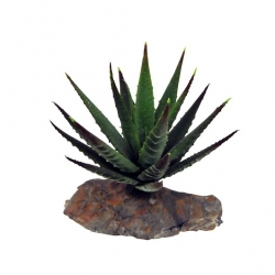 Tigere Aloe