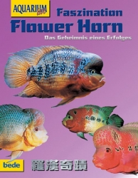 Faszination Flower Horn Chiang