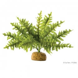 Boston Fern S Rainforest Plant mit Steinbasis