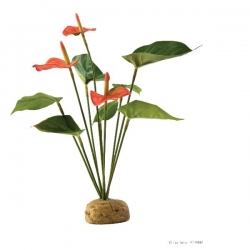 Anthurium Rainforest Plant mit Steinbasis