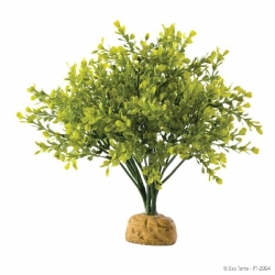 Boxwood Bush Rainforest Plant mit Steinbasis