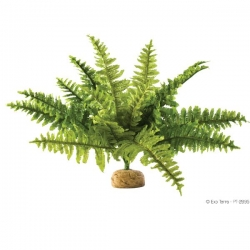Boston Fern M Rainforest Plant mit Steinbasis