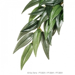 Ruscus M Jungle Plant Seidenpflanze