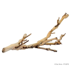 Forest Branch Large 60 cm
